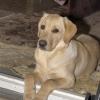 My dog Maya
