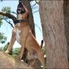 rex the tree climber