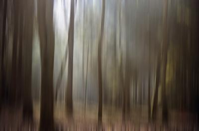 trees stretch.jpg