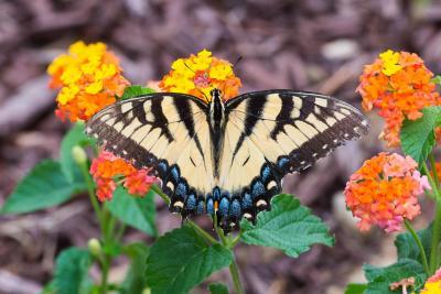 Butterfly-1582.jpg