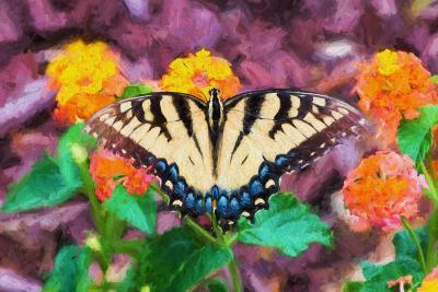 Butterfly-.jpg