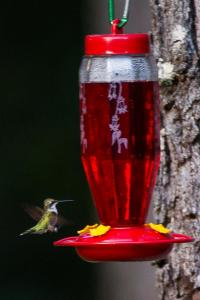 Hummingbird-1940.jpg