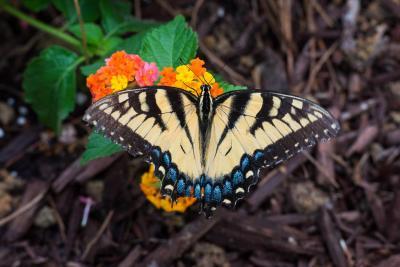 Butterfly-1602.jpg