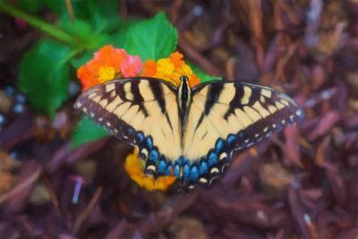 Butterfly--2.jpg